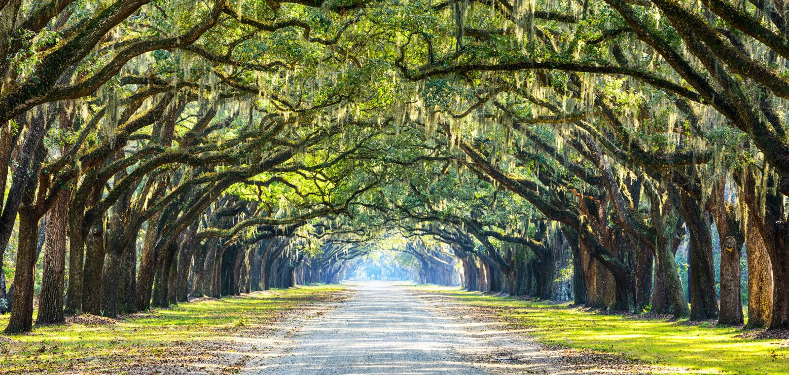 Trees - Coastal Georgia Home Sales
